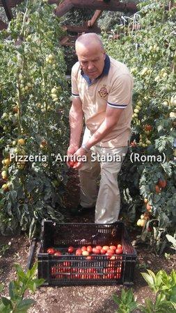 Pizzeria Antica Stabia: prodotti biologici