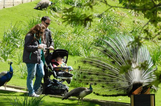 Prinknash Bird And Deer Park: families with toddlers love the park