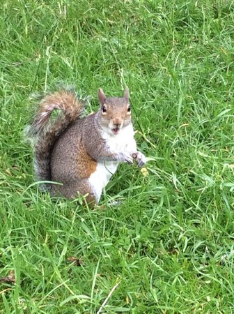 Regent's Park: Squirrels in Regents Park