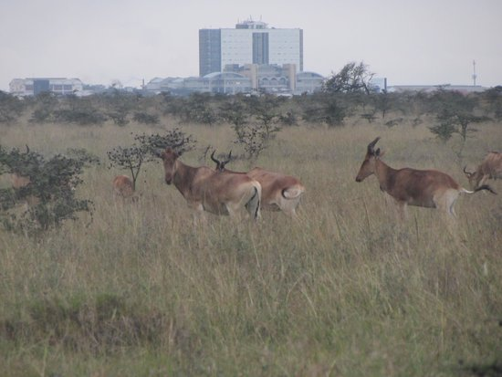 Parc national de Nairobi : Very cool to see wild animals with a city as a backdrop