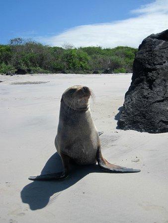 Puerto Chino Beach : a pup posing