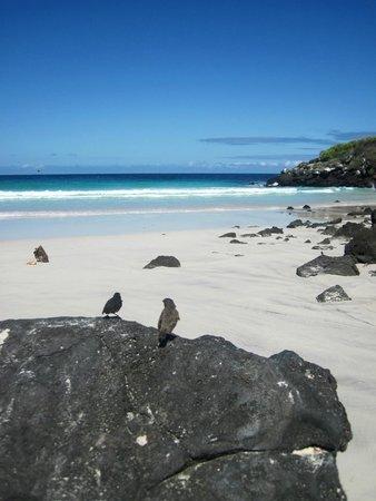Puerto Chino Beach Finches
