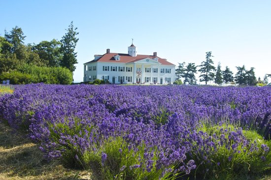 George Washington Inn: Lavender in front of the Inn