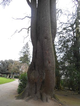 Château de Chenonceau : Дерево Дианы