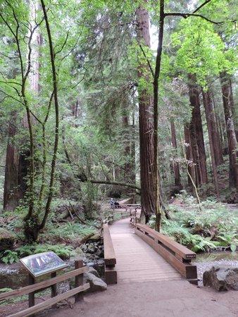 Extranomical Tours : Muir Woods