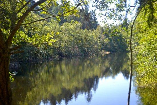 Lakedale Resort at Three Lakes: Scenery by Lake