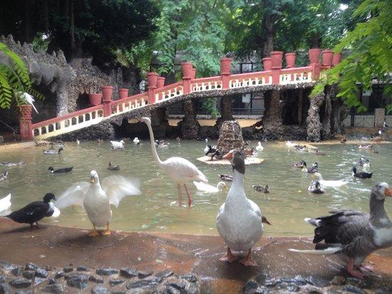Algeria: Alger zoo