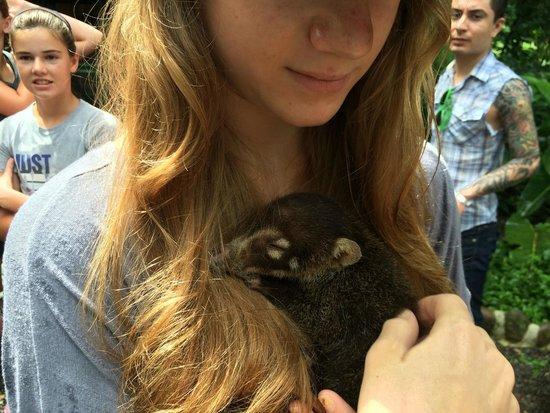 Proyecto Asis: A baby Coati