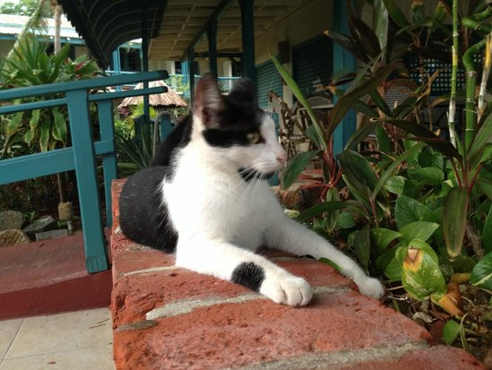 Island Beachcomber Hotel: Hotel kitty, Chatty