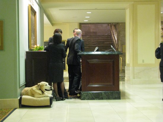Fairmont Hotel Vancouver: The resident pup at the Concierge desk