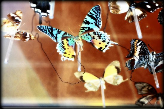 Sachs Butterfly House: *