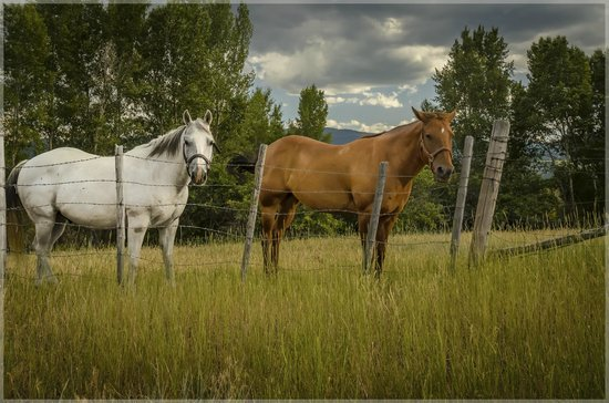Hansen-Silver Guest Ranch : Just Up The Road