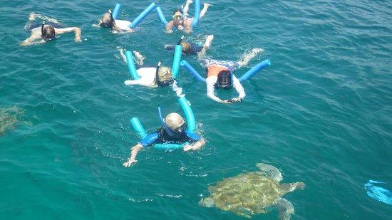 Good Times Catamaran Cruises: Amazing Turtles