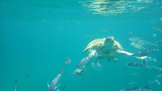Good Times Catamaran Cruises: If you like sea turtles take this tour