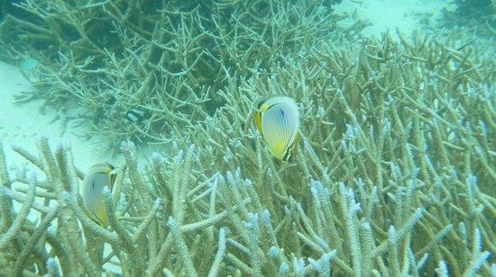 W Maldives: 스노클링하면 볼 수 있는 물고기