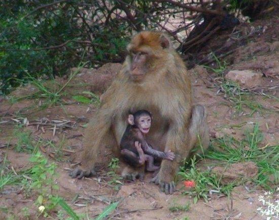 Camping Havre de Paix : les singes de coin