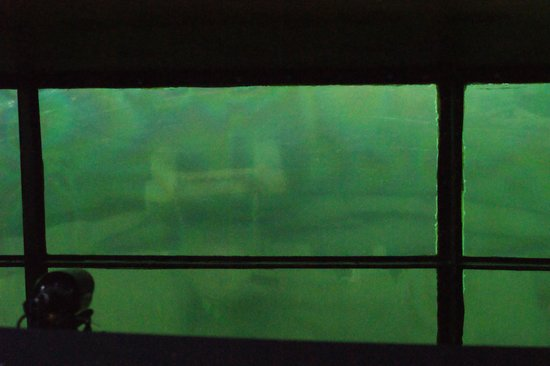 Glass Bottom Shipwreck Tours: shipwreck as seen from the glass bottom.