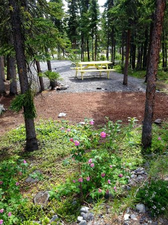 Northern Nights Campground and RV Park: Tent Site
