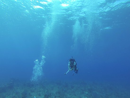 Cayman Turtle Divers: Diving with CTD