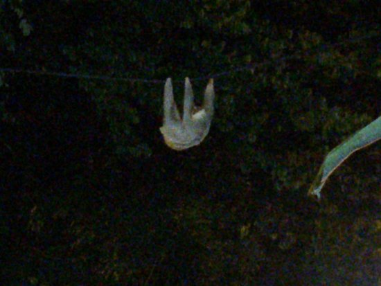 "Espadilla Ocean Club : Sloth on the ""monkey bridge"" that Coco stopped to let us see"