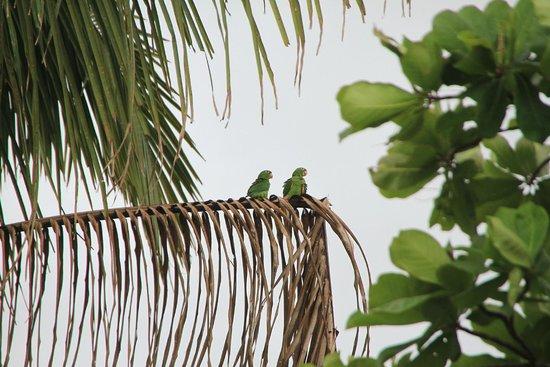 Espadilla Ocean Club : Parrots on the beach