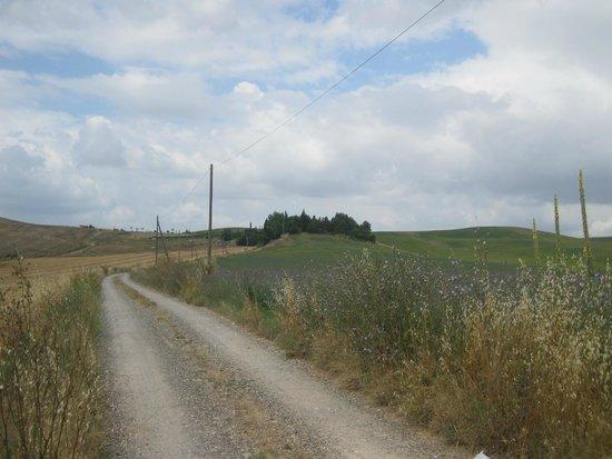 Il Canto del Sole: Driveway