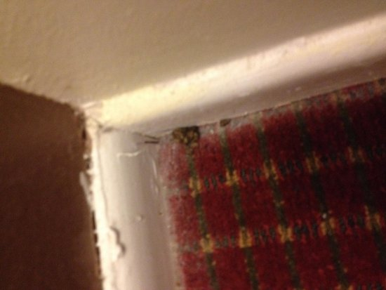 Flagship Inn And Suites: Mouse poop in the corner?