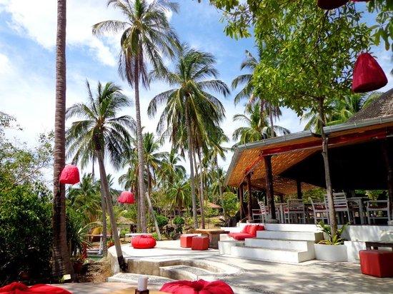 Jungle Club: Территория отеля