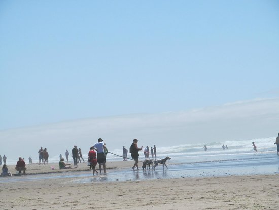 Shearwater Inn: dog beach
