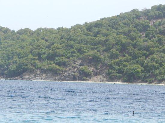 Coki Point Beach : Coki Beach