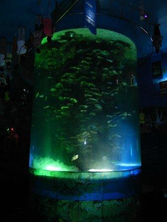 Ocean Aquarium of Penglai : 大水槽