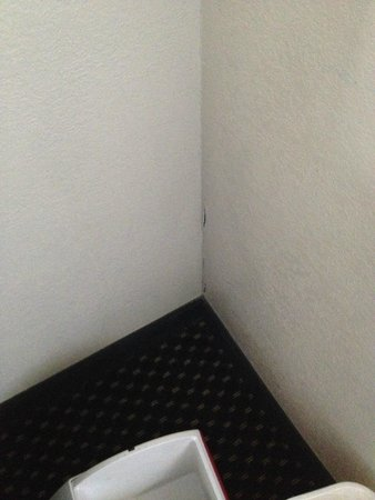 Quality Inn & Suites Lexington: newly remodeled room cracks and chips