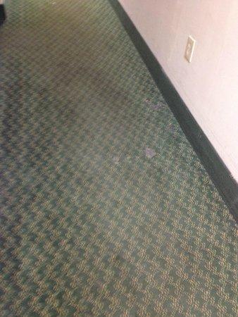 Quality Inn & Suites Lexington: torn up carpet