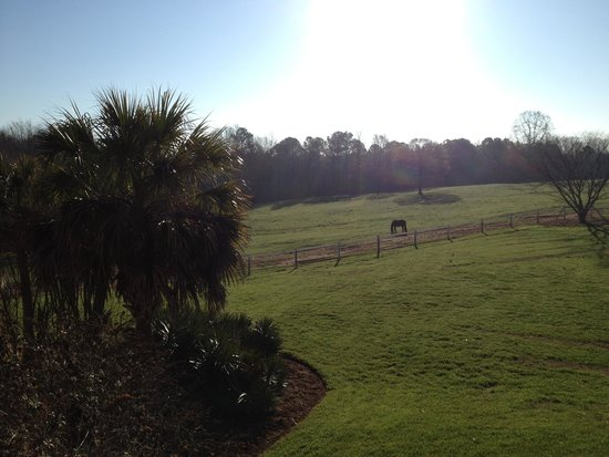 Southern Cross Ranch: My background picture