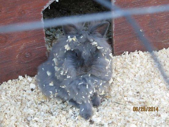 Seabrook Inn: rabbit