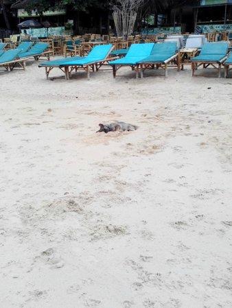 Weekender Resort & Hotel: собаки спят в песке )