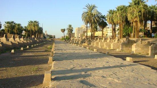 Avenue of Sphinxes : Avenida de las Esfinges a la Entrada del Templo de Luxor.