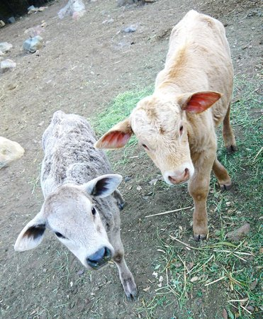 Baja Rancho La Bellota: Babies.