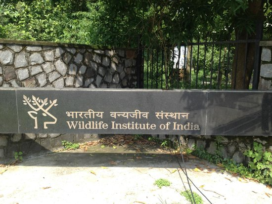 ‪Wildlife Institute Of India‬