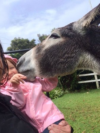 Altura Hotel : The donkeys are very friendly