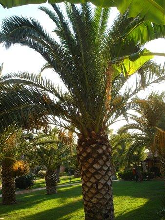 Baia del Sole Resort: giardino