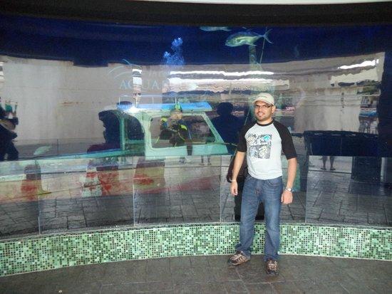 La Isla Shopping Village : acuario del parque acuatico del mall la isla