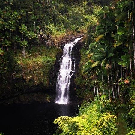 The Inn at Kulaniapia Falls : The Falls