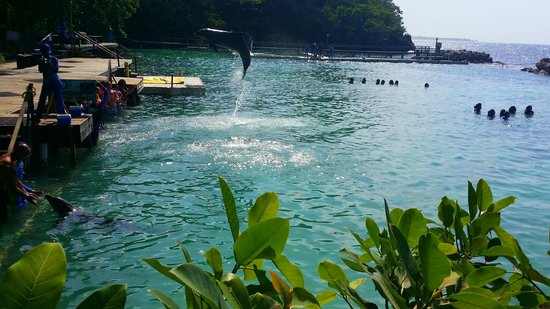Dolphin Cove. Ocho Rios