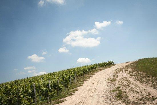 Capian, France: Vue du vignoble