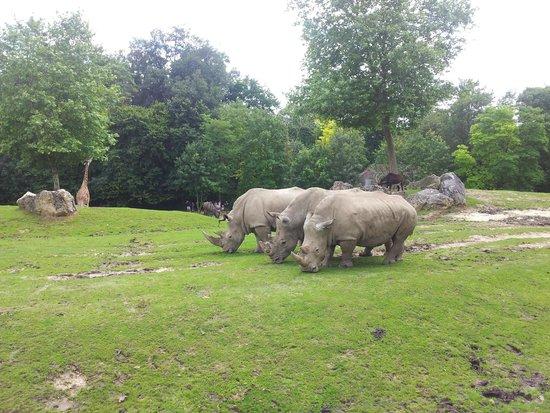 Zoo beauval photo de zooparc de beauval saint aignan for Chambre zoo de beauval