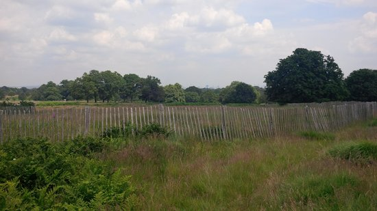 Richmond Park: the park