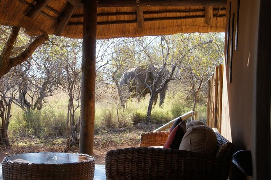 Naledi Bushcamp and Enkoveni Camp: Elephant passing the deck of the Paperbark suite