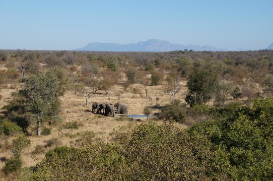 Naledi Bushcamp and Enkoveni Camp: View from the lunch deck