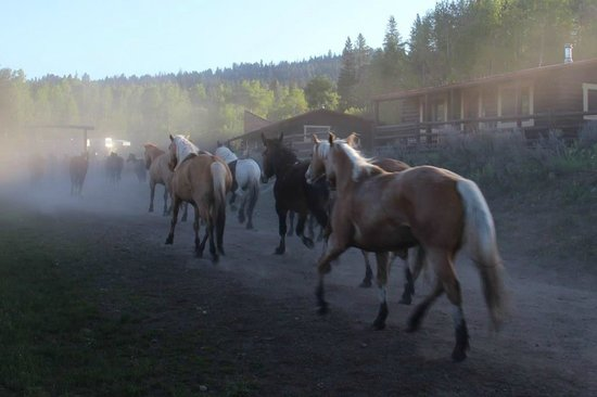 Heart Six Guest Ranch : Galop